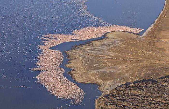 вид, зрелище, фламинго, озеро