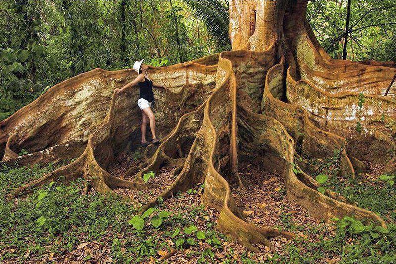 Юмор девушка, дерево, корни, красота