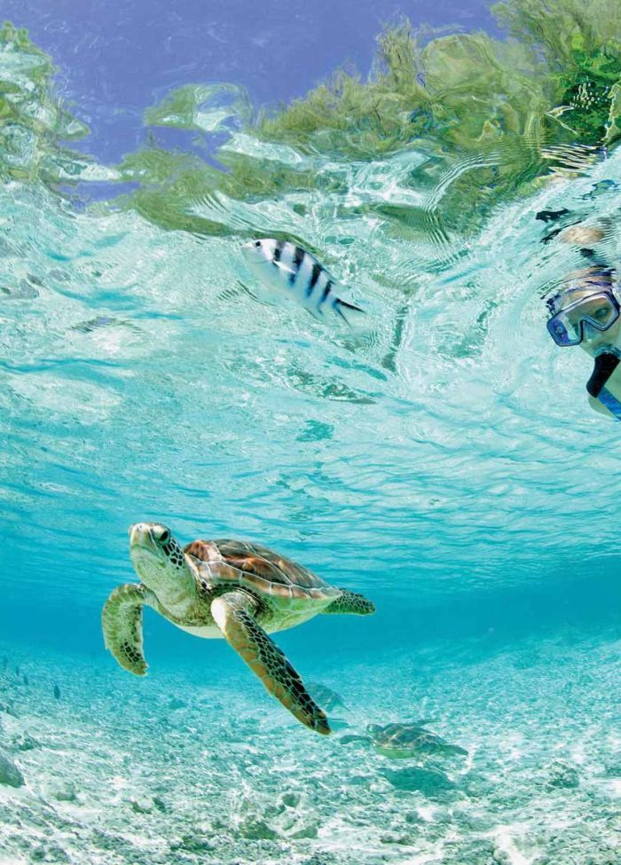 Фото красота, под водой, природа, черепаха