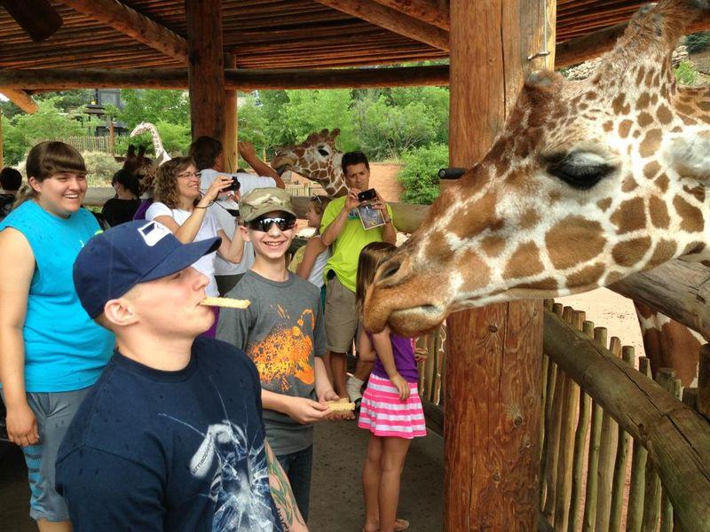 Юмор прикол выражение лица, жираф, картинка, прикол