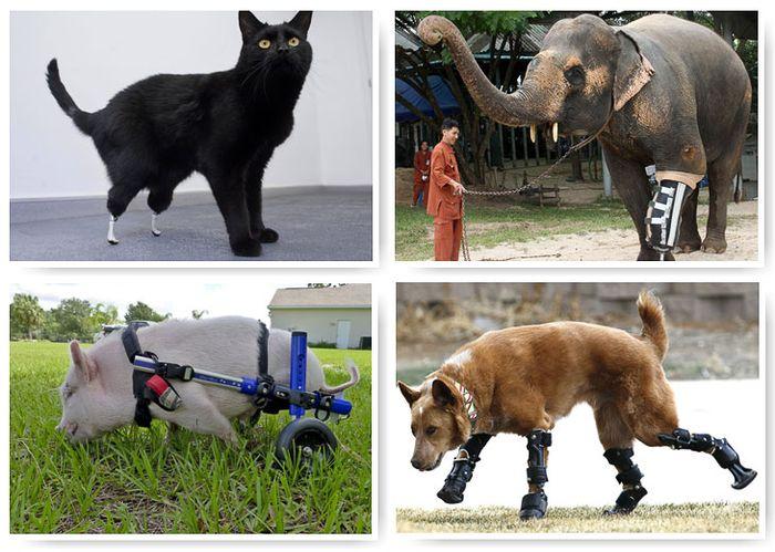 животные, протез, врачи, ветеринары, лечение,