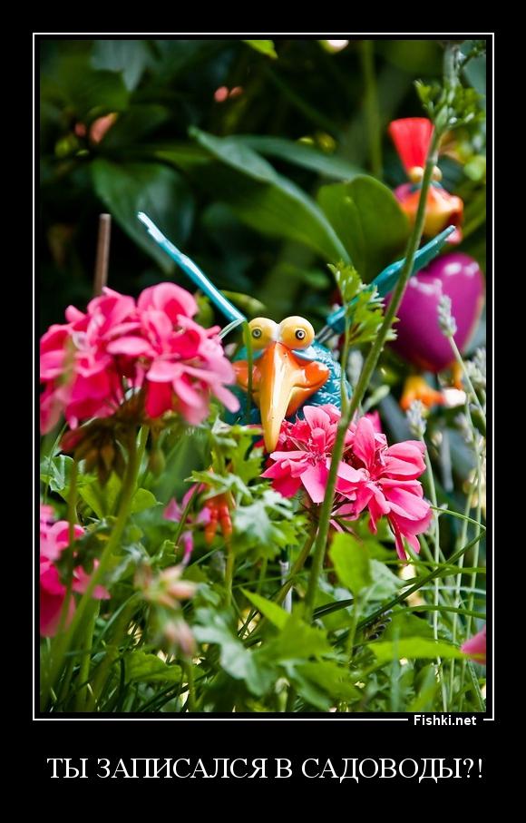 ТЫ записался в садоводы?!