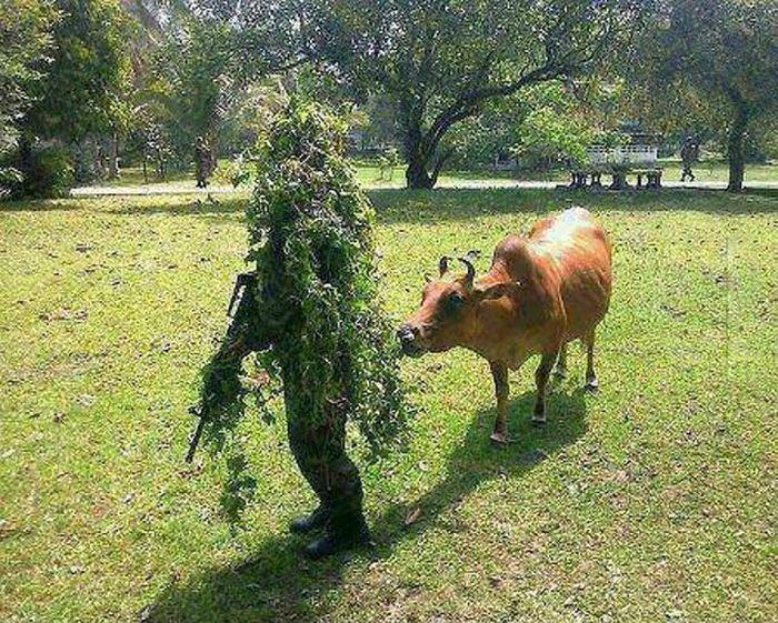 Новый фотоприкол корова, куст, маскировка, снайпер