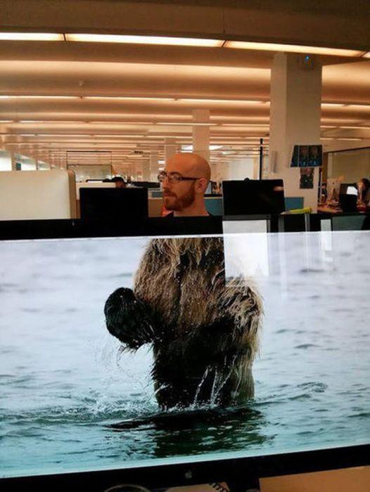 Прикольные фото медведь, прикол, телевизор, экран