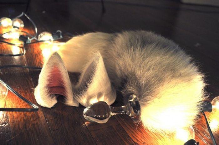 Улетное фото мех, уши, фонарики, хвост