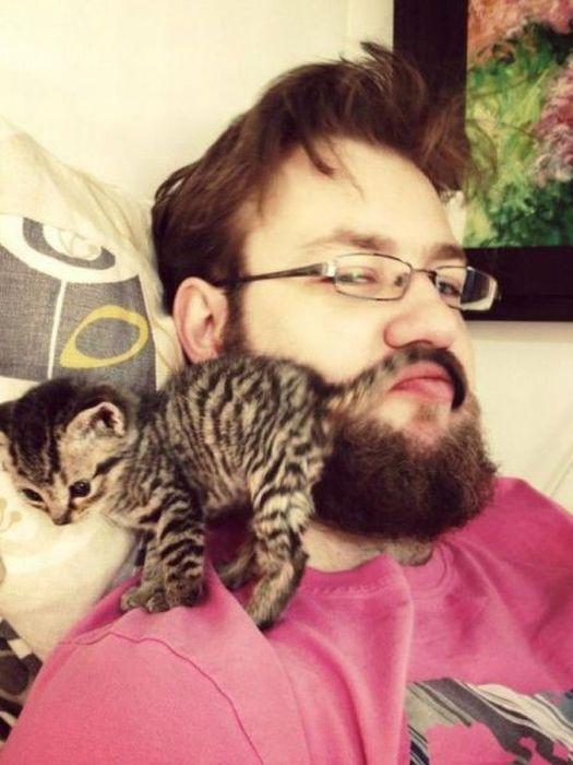 Новые фото борода, котенок, мужик, усы