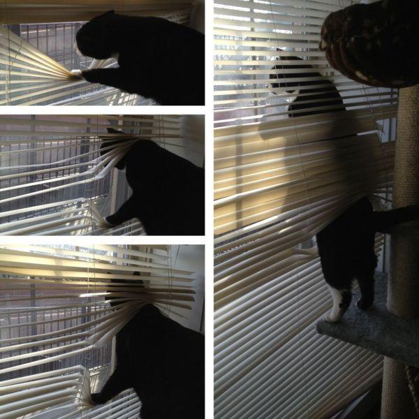 Фотоприкол онлайн бесплатно жалюзи, кот, кошка, питомец