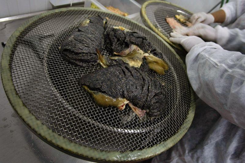 черная икра, осетр, рыба