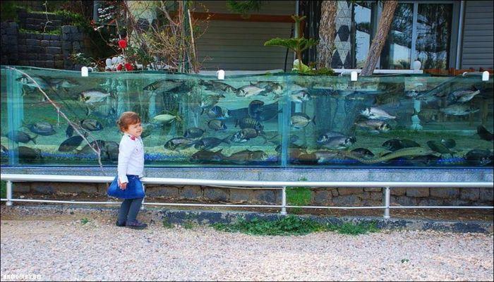 аквариум, турция