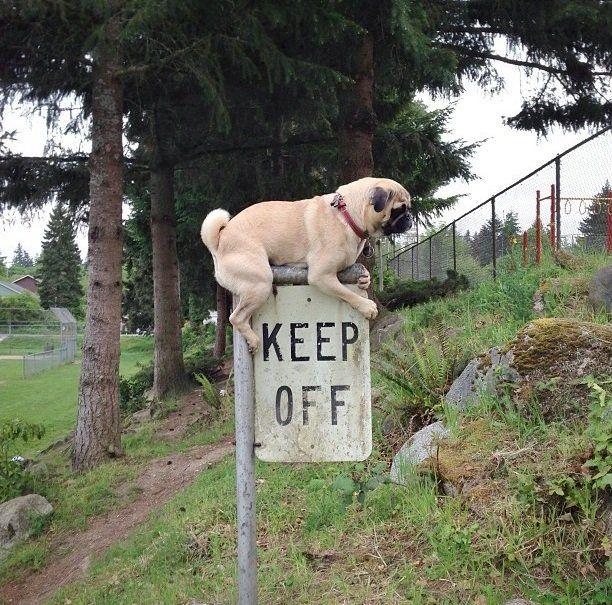 Фотка залез, знак, пес, собака