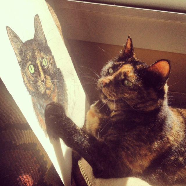 Новый фотоприкол кошка, портрет, прикол, рисунок