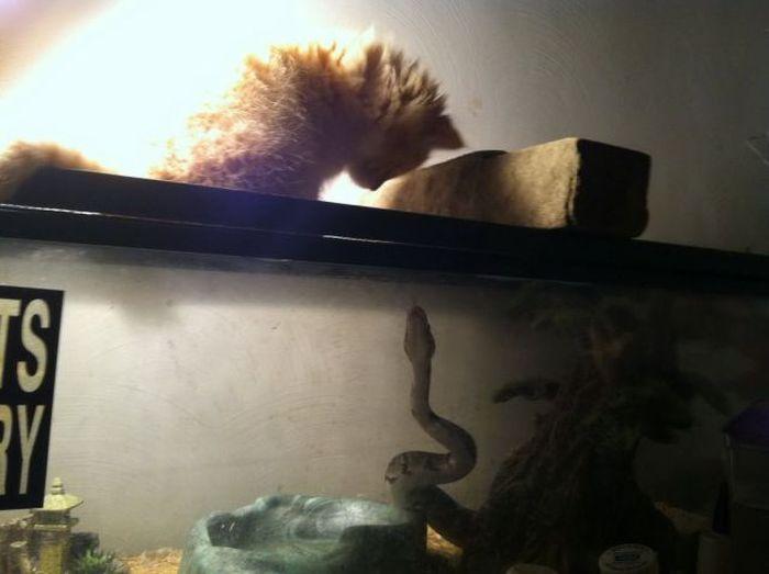 Смешные картинки аквариум, змея, кошка