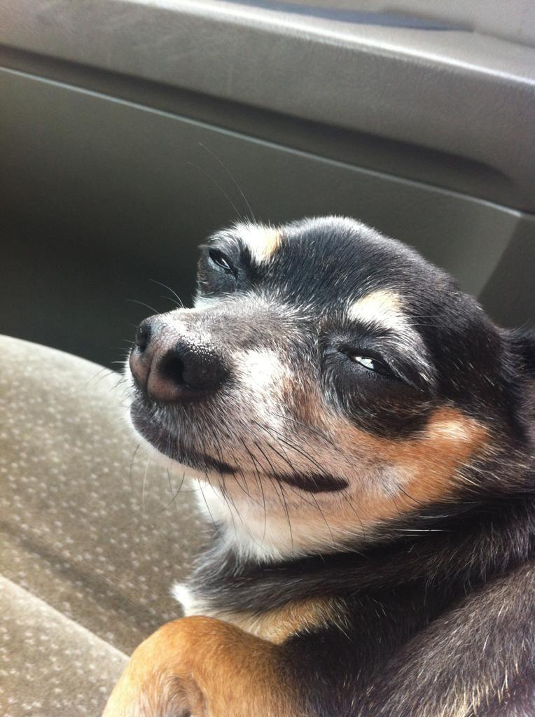 Фото смешное выражение животных