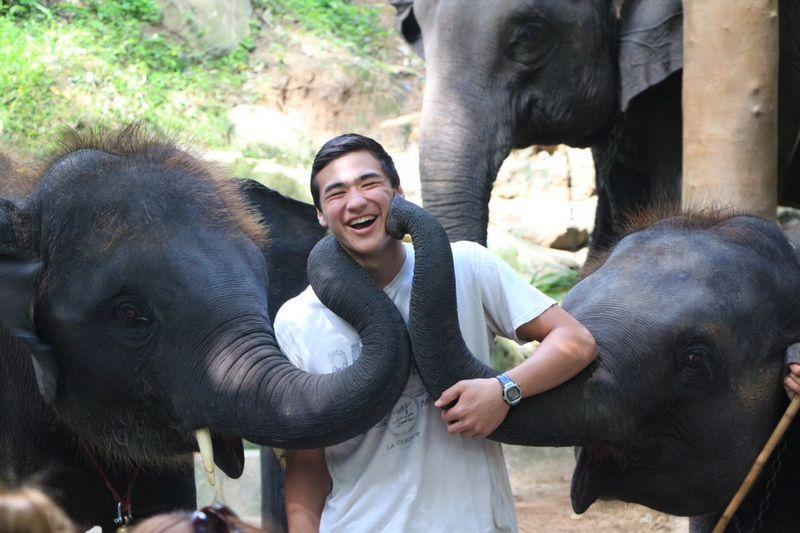 Свежий фотоприкол выражение лица, животные, слоны, хобот