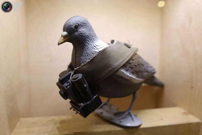 музей, германия, шпион, голубь, автомат