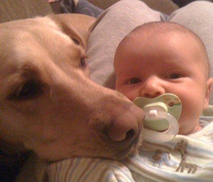 собака, ребенок, дружба