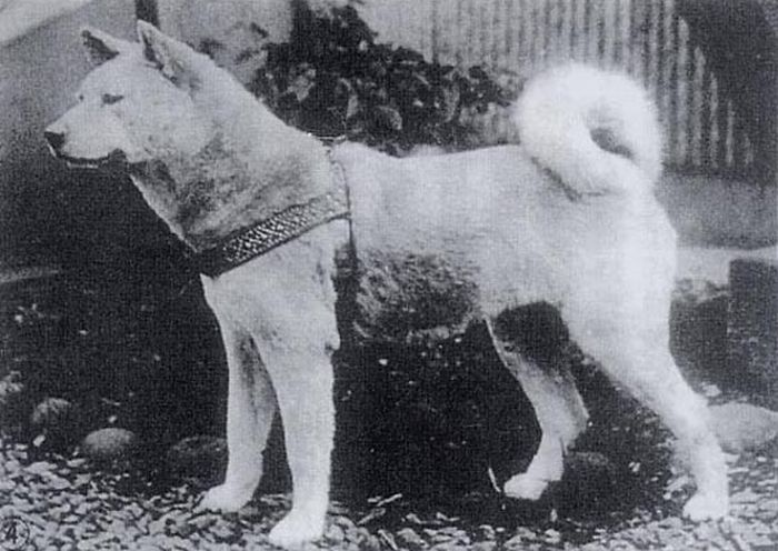 хатико, собака, верность, памятник, история,