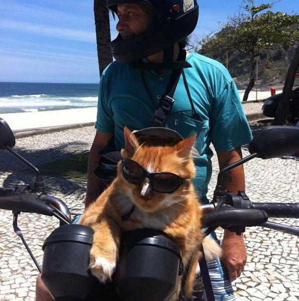 Улетное фото кот, мотоцикл, очки, прикол