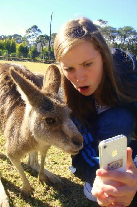 Пикантный фотоприкол айфон, животное, кенгуру, смотрит