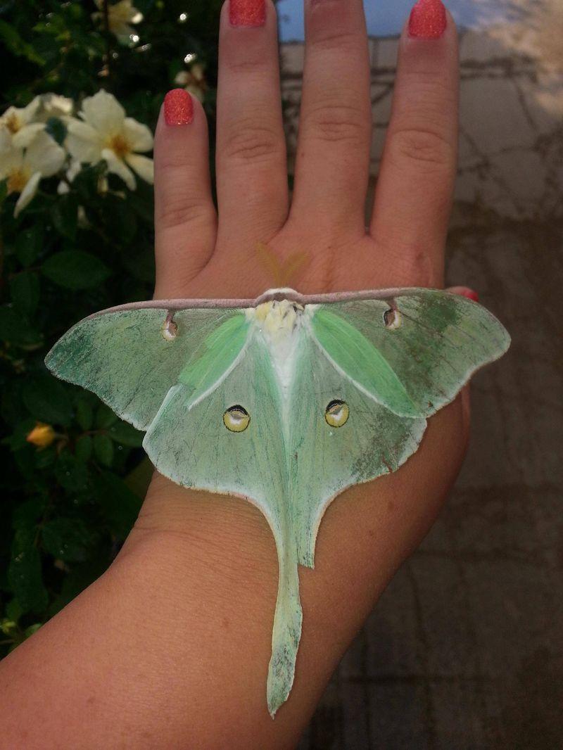 Фото онлайн бабочка, красивое, насекомое