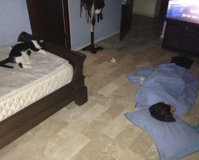 Прикол картинка кот, на полу, прикол, спит