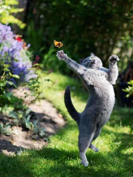 Прикол картинка животное, кот, крутой, прыжок