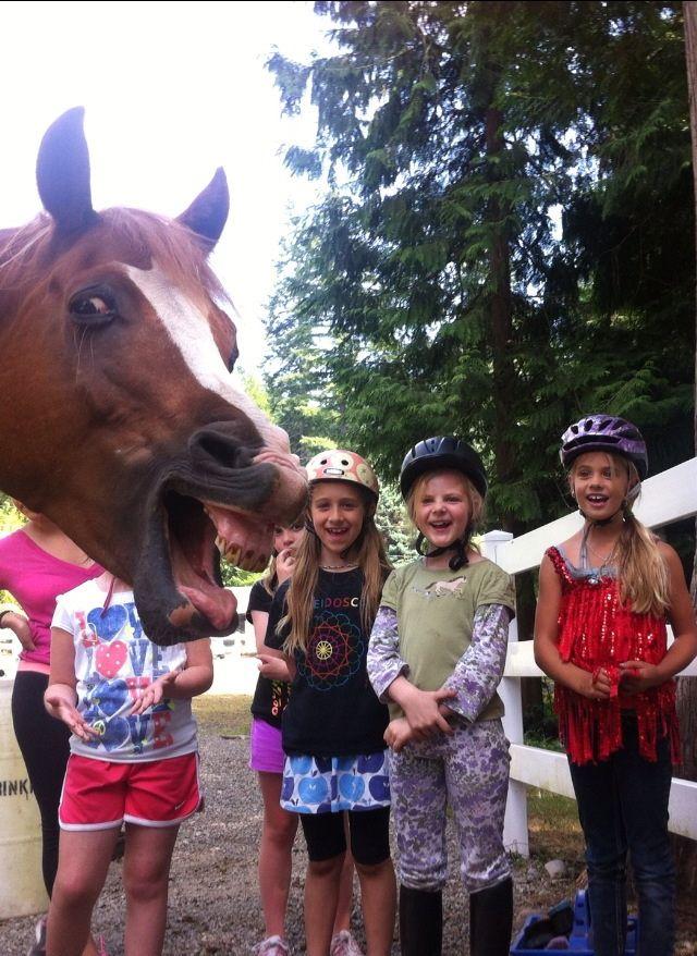 Смешные картинки выражение лица, зубы, лошадь, пасть