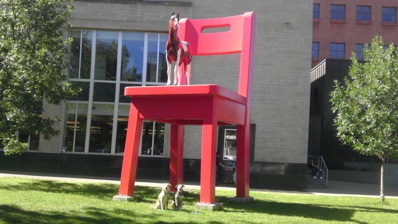 Фотоприкол онлайн бесплатно лошадь, питомцы, собака, стул