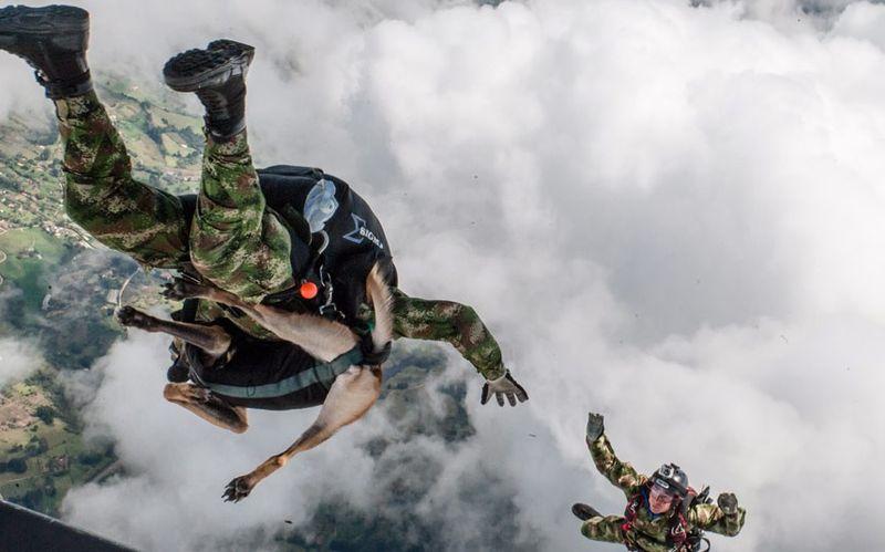 Фотоприкол фото в воздухе, парашют, прыжок, собака