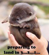 Otterly Cute!