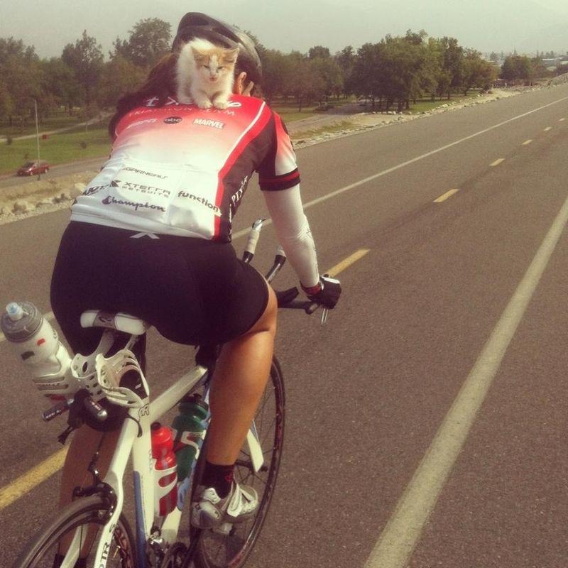Улетное фото велосипедист, кот, на дороге