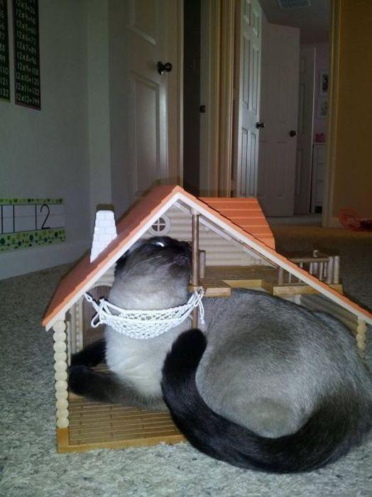 Фотоприкол фото домик, кот, прикол, сидит
