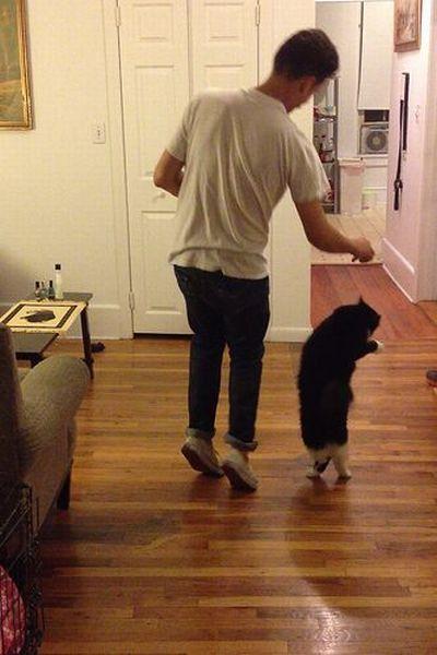 Фотоподборка кот, прикол, танец, хозяин