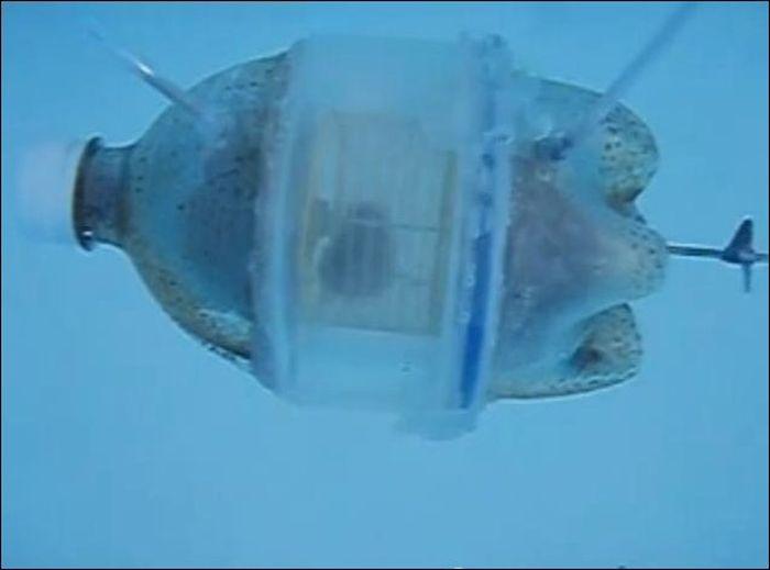 хомяк, подводная лодка, пластиковая бутылка