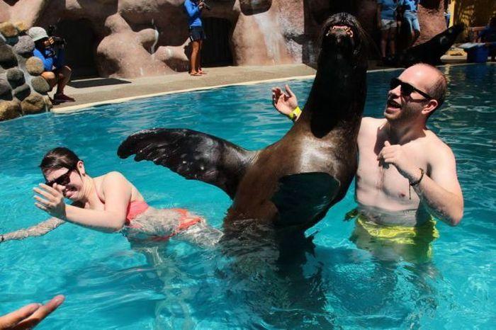 Отпадные фотки бассейн, животное, морской котик, тюлень