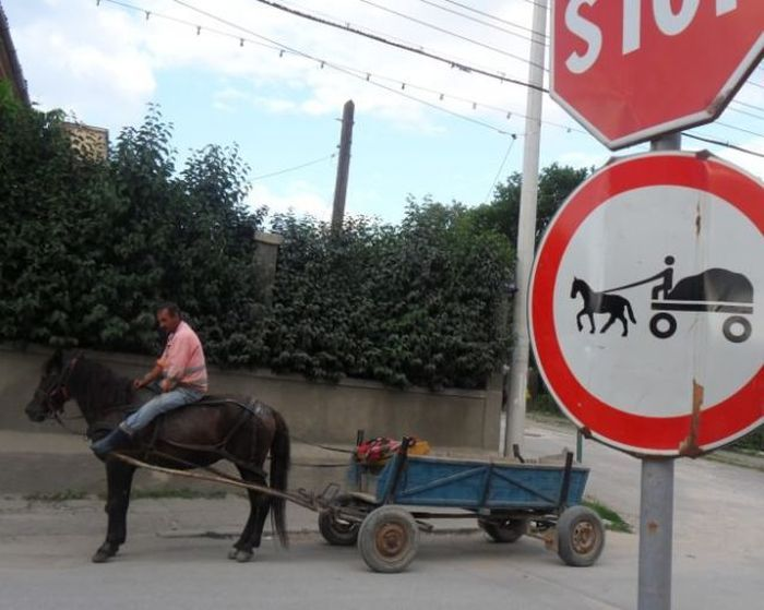Фото знак, лошадь, повозка, прикол