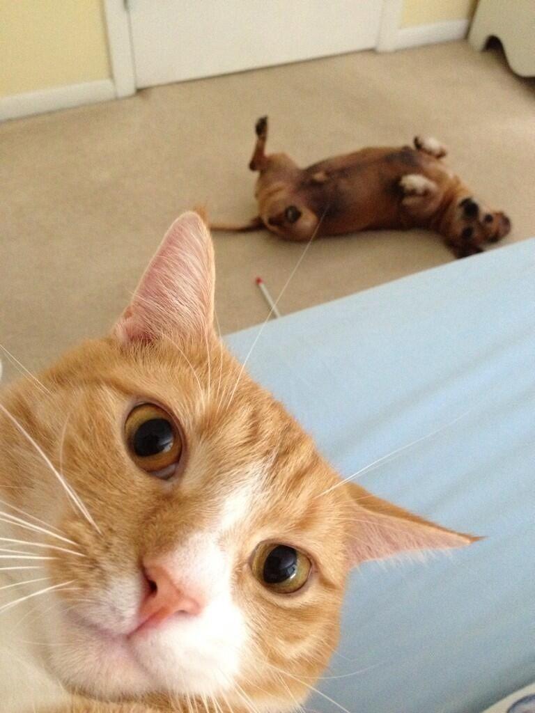 Отпадные фотки выражение лица, кот, питомец, собака
