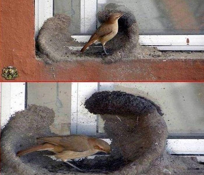 птица, гнездо