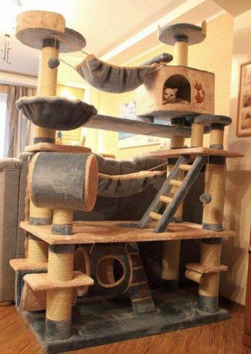Бесплатно фото домик, кот, круто, лазилка