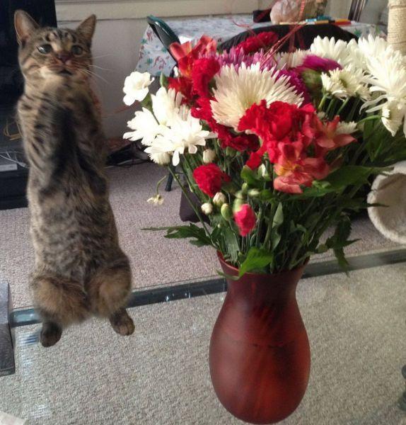 Прикольные фото выражение лица, кот, прикол, цветы