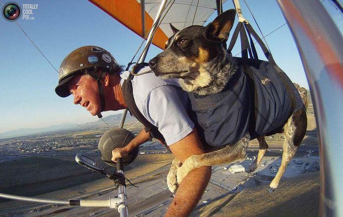 дельтаплан, полет, собака