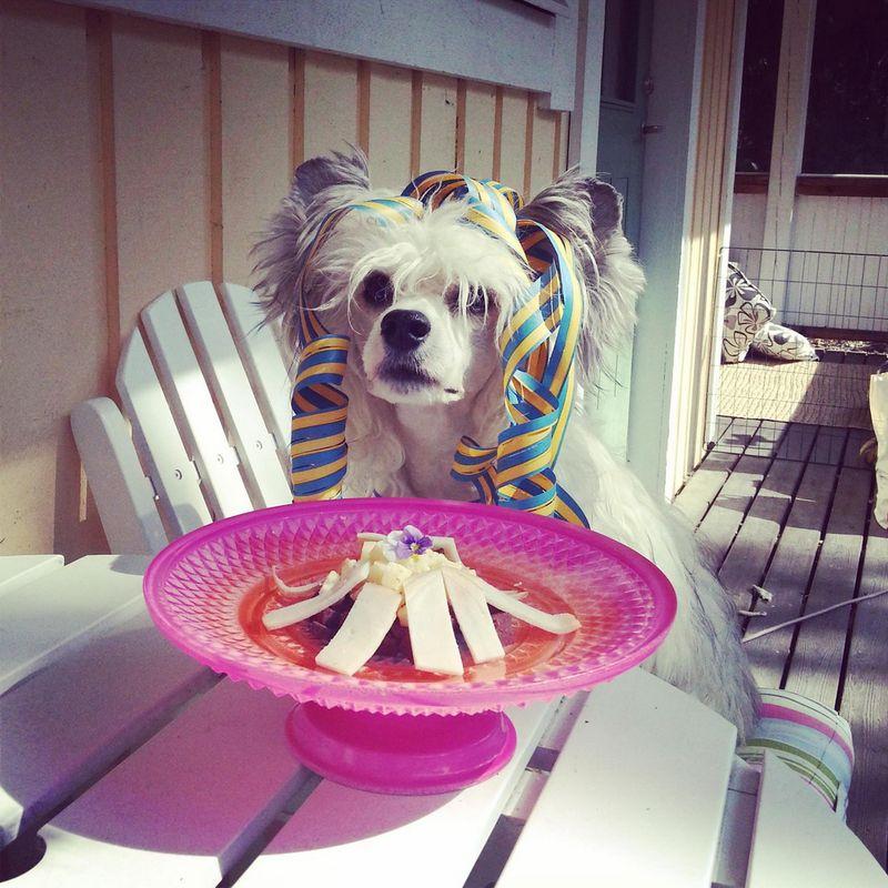 Бугагашеньки еда, питомец, собака, щенок