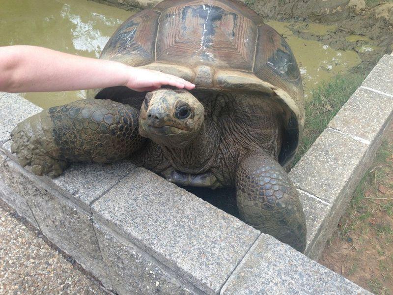 Смешные картинки животное, панцирь, черепаха