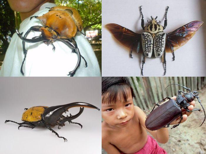 жуки, гиганты, планета