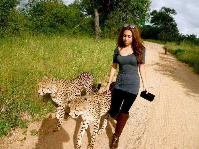 Смешной фотоприкол девушка, звери, кошка, тигр