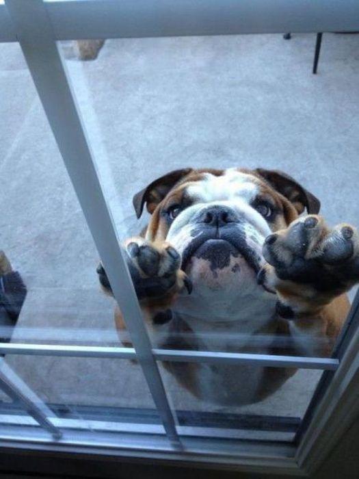 Фотоподборка выражение лица, питомец, собака, стекло