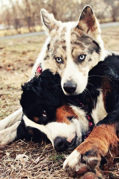 Новый фотоприкол крутая фотография, питомец, собака