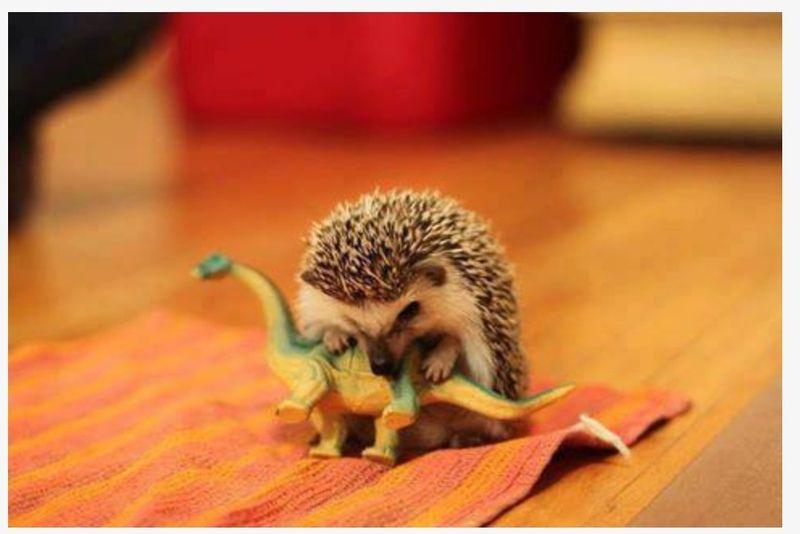 Смешной фотоприкол битва, динозавр, ежик, прикол