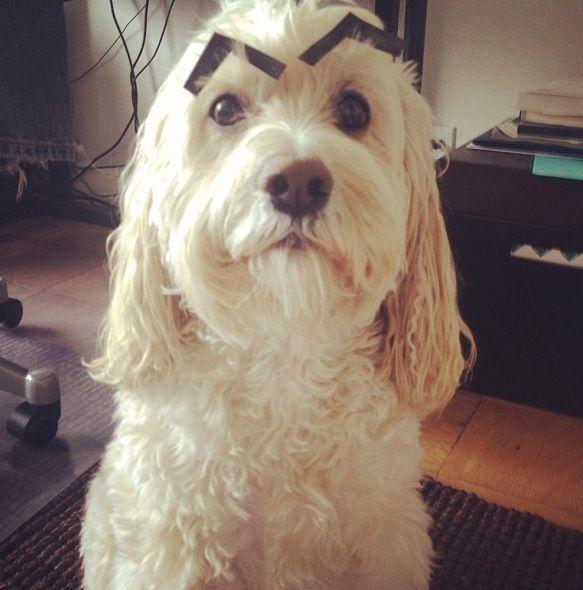 Прекрасные фото брови, питомец, собака