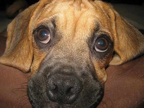 Dear dogs (18 photos)